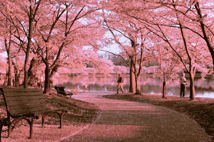 Kyoto Retreat Bảo Lộc