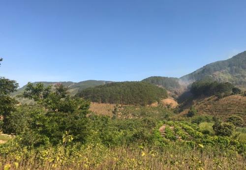 Bán Đất vườn Đà Lạt ngay Đức Trọng giá 590 triệu/850m2