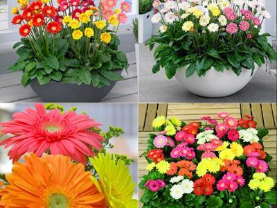 14 loại hoa (cây) chưng ngày Tết để may mắn cả năm? Hoa gì nên tránh?