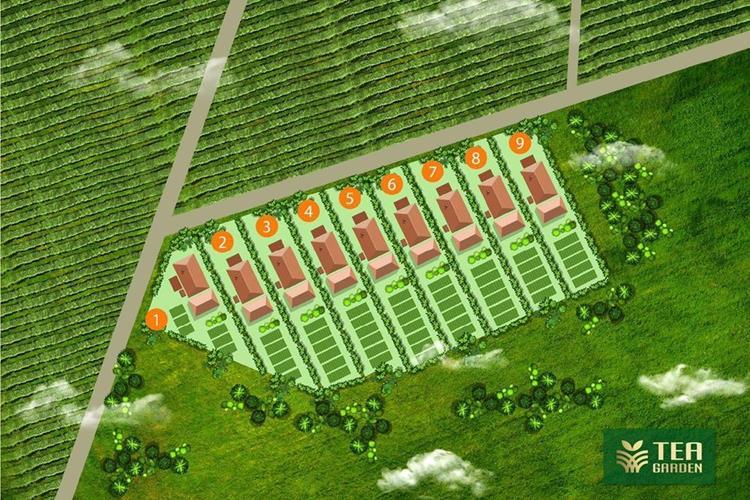 The Tea Gardens