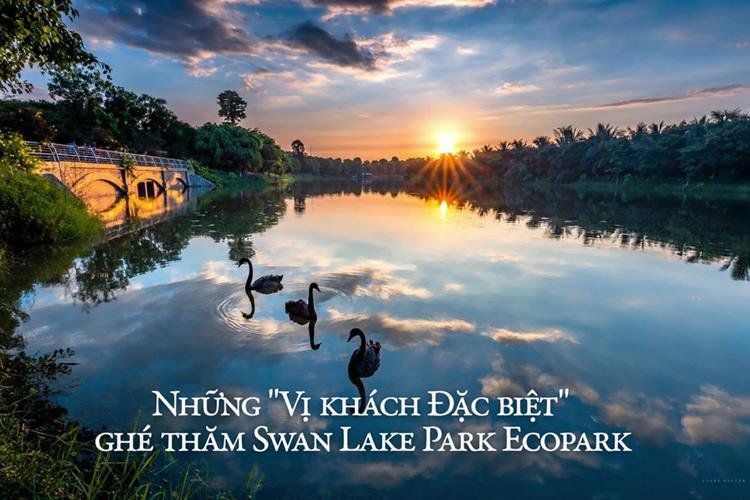 SwanLake Residences