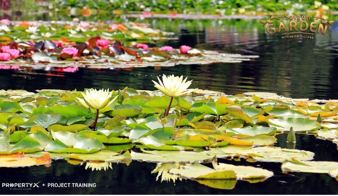 Phong cảnh thiên nhiên dự án Saigon Garden Riverside Village